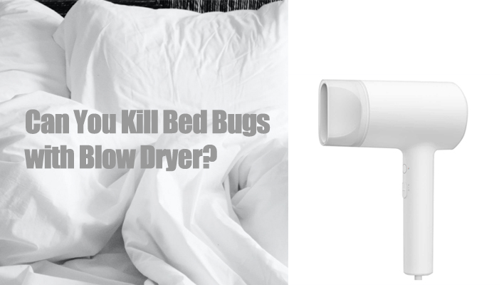 kill-bed-bugs-with-blow-dryer